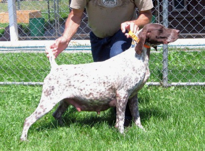 Puppy Litter German Short Haired Pointers Akc Contrary Creek | Dog ...